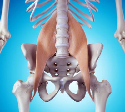 Core strength Psoas Muscle