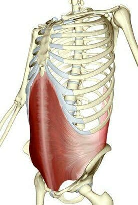 Core strength transverse abdominis